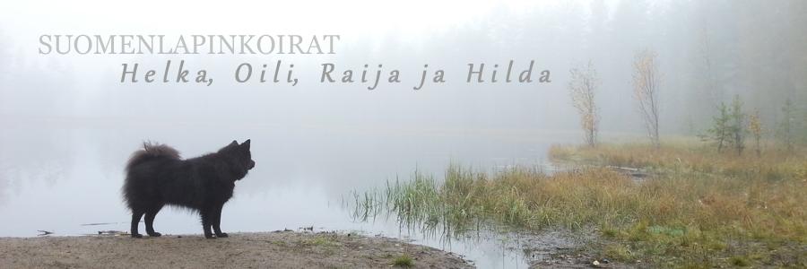 Suomenlapinkoirat Helka, Oili, Raija ja Hilda